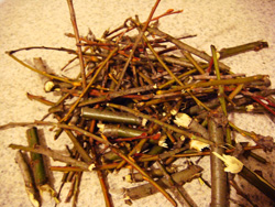 willow twigs for rooting hormone pile