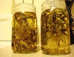 willow tea steeping