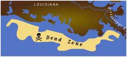 Gulf of Mexico Dead Zone in 1999
