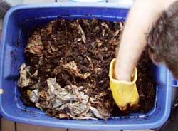 Jimi\'s Worm Compost Bin
