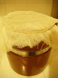 Kombucha Fermenting with Cheesecloth Covering It