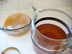 Kombucha SCOBY and Tea