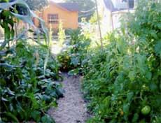 Your Backyard Gardener Crops