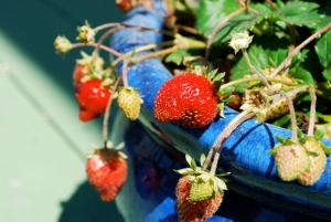 Strawberries. Right after taking the shot, I ate them!